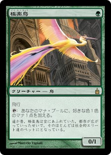 (RAV-RG)Birds of Paradise/極楽鳥